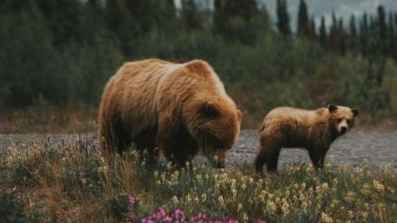 Wildlife Telegram Group Links